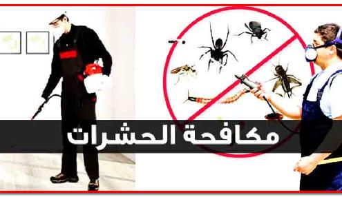 شركة مكافحة الحشرات بمكة