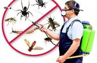 شركات رش الحشرات بالمبيدات